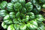 Growing Asian Vegetables