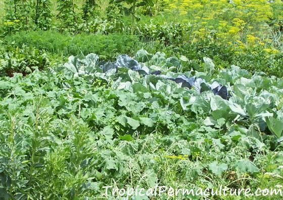 Nitrogen hungry vegetable garden