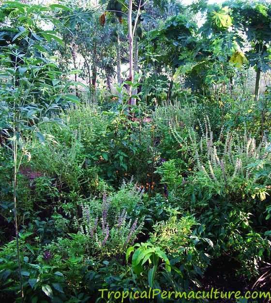 Permaculture garden design principles call for diversity.